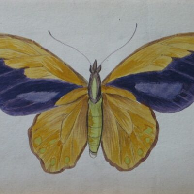 LDBTH:461 - Butterfly