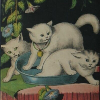 LDBTH:69 - Three White Cats and Tub